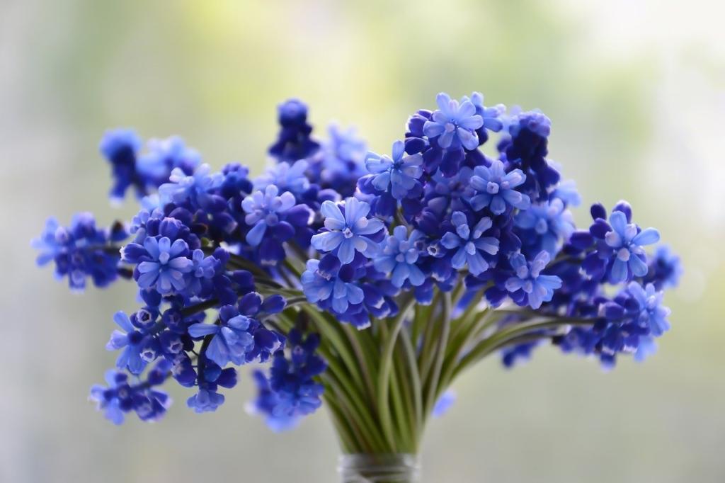 ムスカリの花束